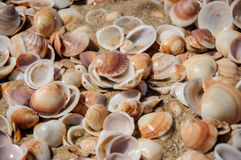 Sand och skalbakgrund Royaltyfri Fotografi