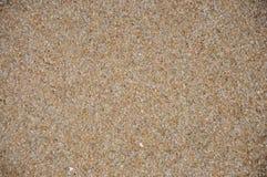Sand och skalbakgrund Arkivbilder