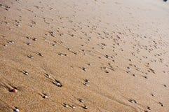Sand- och skaltextur Arkivfoton