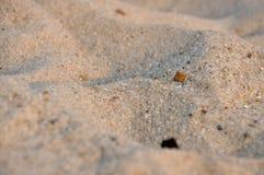 Sand på hav-sidan Arkivbild