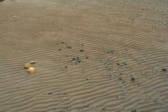 sand på kusten Arkivbild