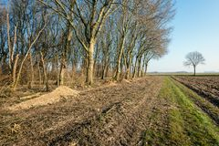 Sand path along a forest with bare recently pruned trees stock images