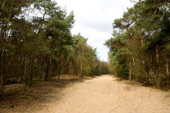 Sand path in forest Royalty Free Stock Photo