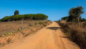 Sand path through forest. A sand pathway leading through a forest in Portugal Royalty Free Stock Images