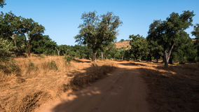 Sand path through forest. A sand pathway leading through a forest in Portugal Royalty Free Stock Image