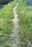 Sand path with grass Stock Photos