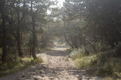 Sand path leading into the woods royalty free stock photos