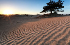 Sand pattern in morning sunshine Royalty Free Stock Images
