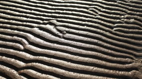 Sand pattern zebra. The sand waves abstract background Stock Image