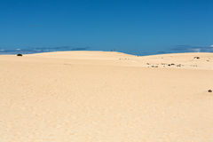 Sand patterns after wind  on the Nature reserve, Park Natural, Corralejo, Stock Photo