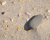 Sand and Pebble. A stone and some seashell pieces lying on a sandy beach royalty free stock photos