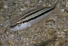 Sand Perch royalty free stock photo