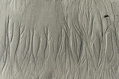 Sand picture drawn by the tide Royalty Free Stock Photo