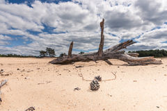 Sand Plain and Dunes in a Dutch nature reserve Stock Images