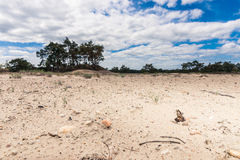Sand Plain and Dunes in a Dutch nature reserve Royalty Free Stock Photo