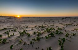 Sand plains on the beach at dawn Stock Photo
