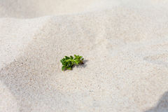 Sand and plant. Stock Photos