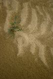Sand & Plant Life Stock Photo