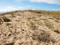 Sand and plants on  dunes beach in bright day Royalty Free Stock Photography