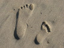 Sand prints. Adult footprint and child's footprint in the sand stock photo
