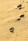 Sand Prints Royalty Free Stock Photography
