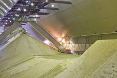 Sand processing. Plant close up Royalty Free Stock Photography