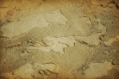 Sand after rain Royalty Free Stock Image