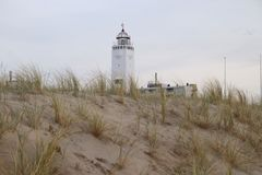 Sand reed at the dunes of Noordwijk in the Netherlands at the North Sea coast with the white lighthouse on the background. Sand reed at the dunes of Noordwijk royalty free stock image