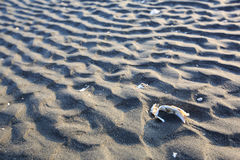 The sand  ripples. The beautiful lines of sand Royalty Free Stock Photo