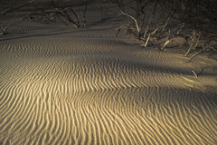 Sand ripples and driftwood on Culbin beach in Scotland. Stock Images