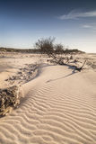 Sand ripples and driftwood on Culbin beach in Scotland. Royalty Free Stock Photography
