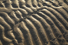 Sand Ripples at Low Sun royalty free stock photo