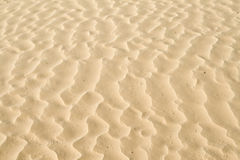 Sand ripples texture. Ripples in the sand dunes from the Sahara Stock Images