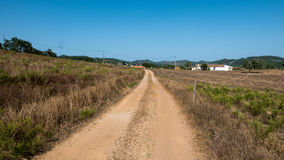 Sand road in Algarve. A sand road surrounded by trees leading through the portuguese Algarve Stock Images