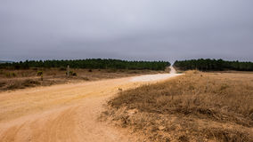 Sand road in Algarve. A sand road surrounded by trees leading through the portuguese Algarve Royalty Free Stock Images