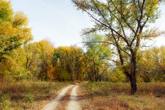Sand road in the autumn forest Stock Photos