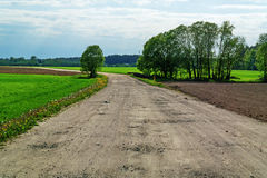 Sand road through spring agricultural field. Stock Images