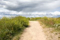 Sand Road and Thick Grass Stock Photography