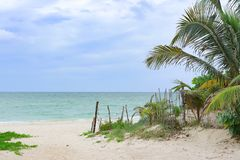 Sand road to beach with rustic fence and sea grapes and palm trees showing horizon of ocean meeting the sky stock photos