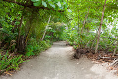 Sand road to the beach in tropical forest Royalty Free Stock Image