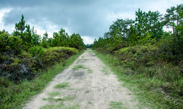 Sand road to the forest. Use in background Stock Image