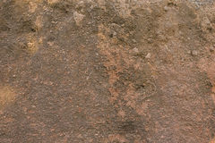 Sand rock texture with roots. background Royalty Free Stock Image