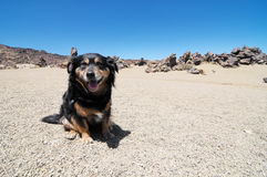 Sand and Rocks Desert. Dog and Sand and Rocks Desert on Teide Volcano, in Canary Islands, Spain Stock Image