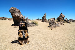 Sand and Rocks Desert. Dog and Sand and Rocks Desert on Teide Volcano, in Canary Islands, Spain Stock Photography