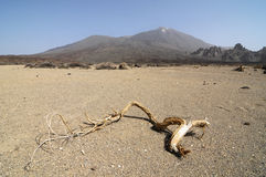 Sand and Rocks Desert. On Teide Volcano, in Canary Islands, Spain Stock Photography