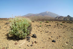 Sand and Rocks Desert. On Teide Volcano, in Canary Islands, Spain Royalty Free Stock Photos