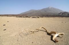 Sand and Rocks Desert. On Teide Volcano, in Canary Islands, Spain Stock Images