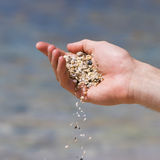 Sand scatter from palm Stock Image
