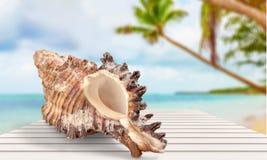 Sand. Sea isolated island coast snail white Royalty Free Stock Photography