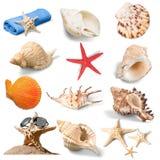 Sand. Sea isolated island coast snail white royalty free stock photo